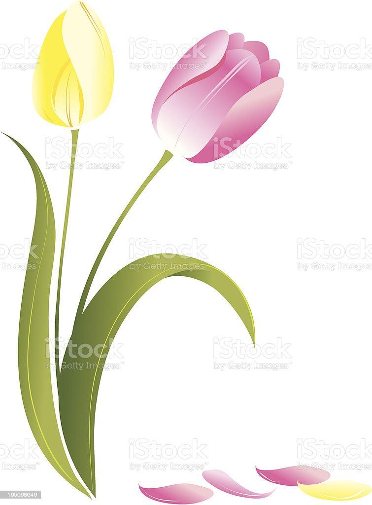 Tulip royalty-free stock vector art