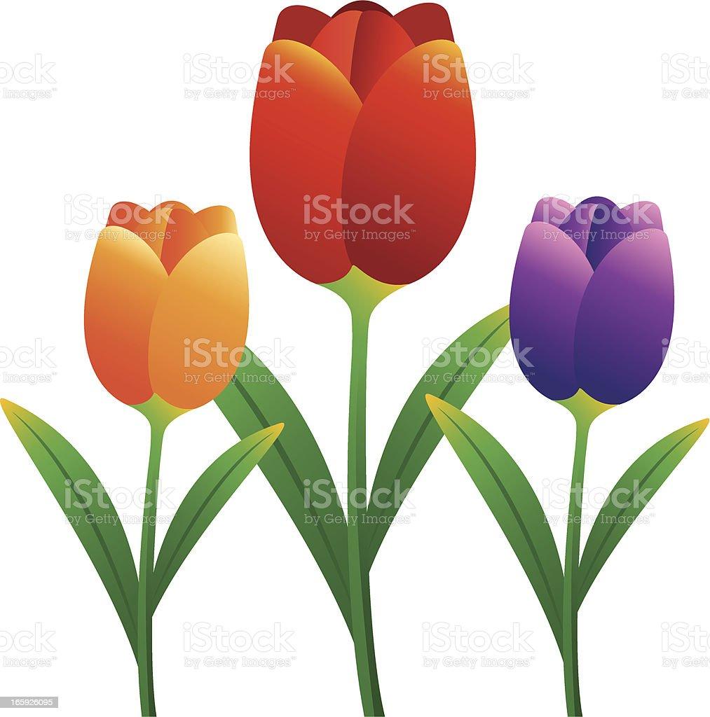 Tulip vector art illustration