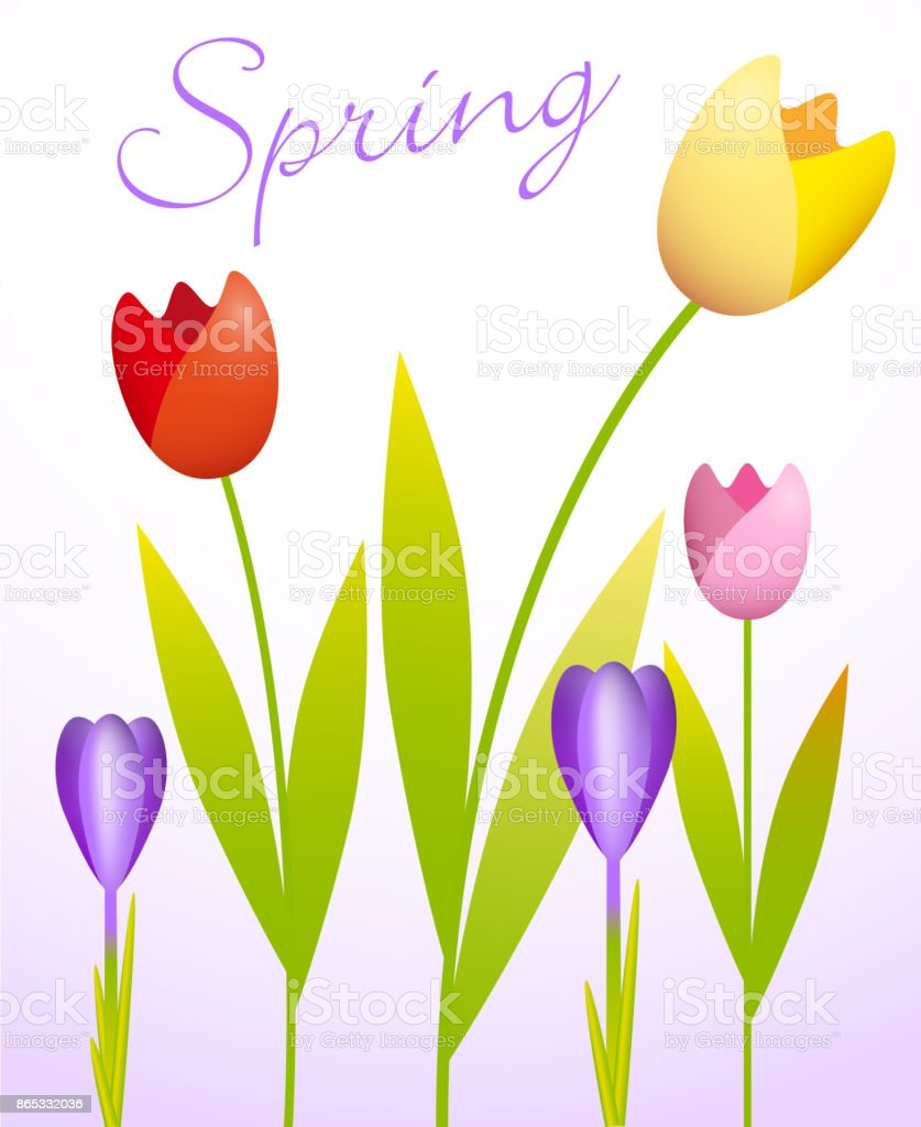 Tulips and Crocuses vector art illustration