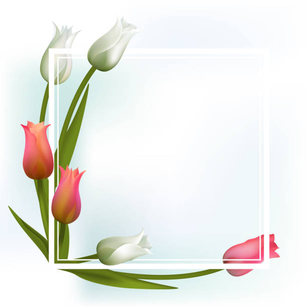 Royalty Free Bunch Of Tulips Clip Art, Vector Images ...