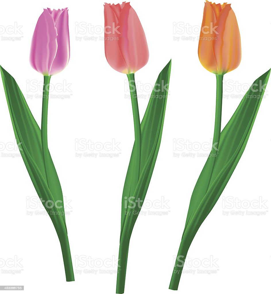 tulips separate royalty-free stock vector art