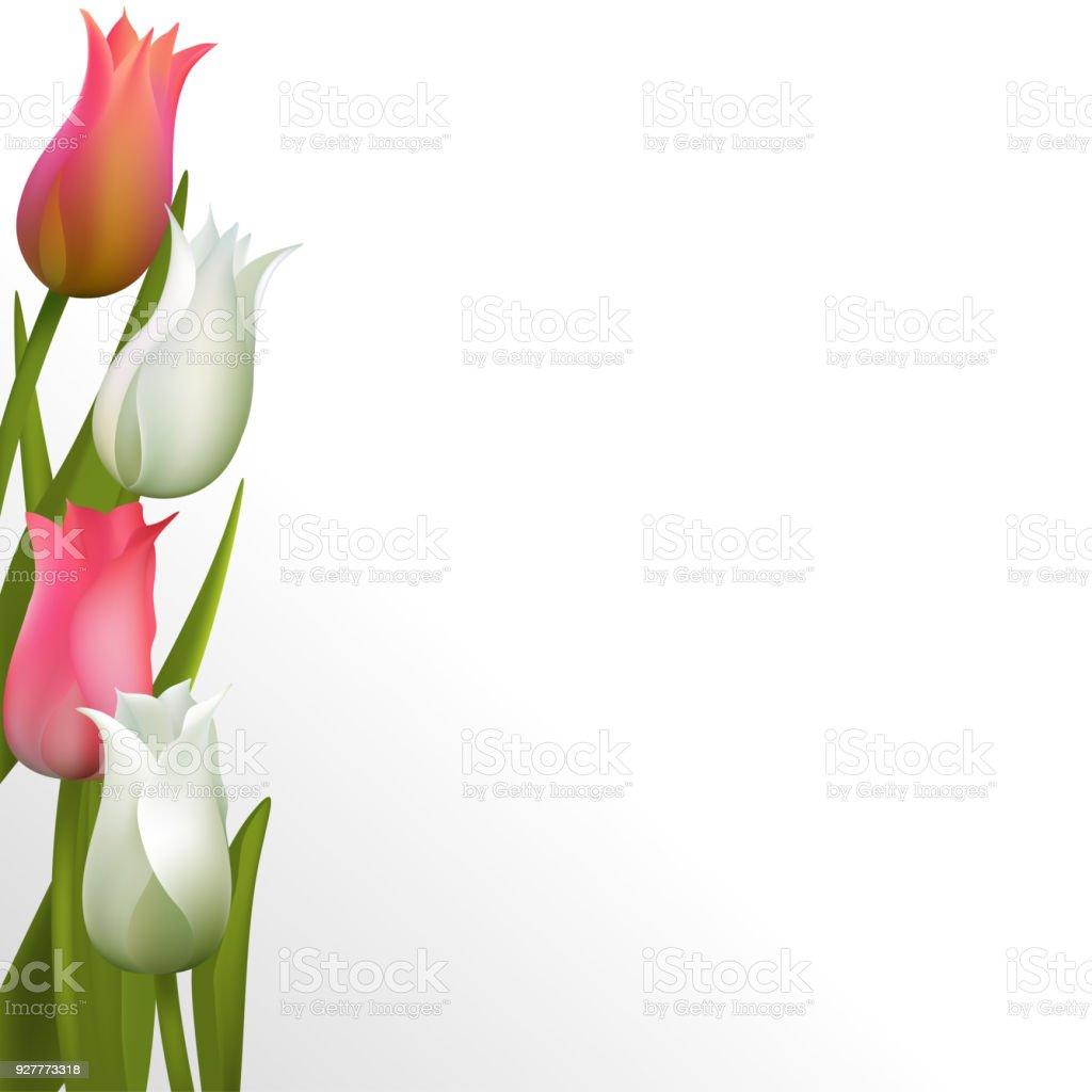 Spring Green Leaves And Flowers Background With Plants: Tulips Spring Flowers Floral Background Bouquet Pink White