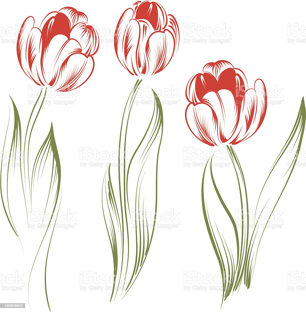 tulips royalty-free tulips stock vector art & more images of art and craft