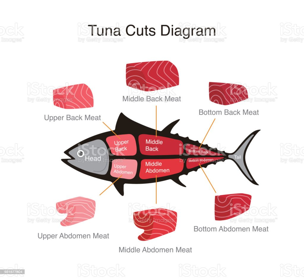 tuna fish cuts diagram, vector illustration vector art illustration