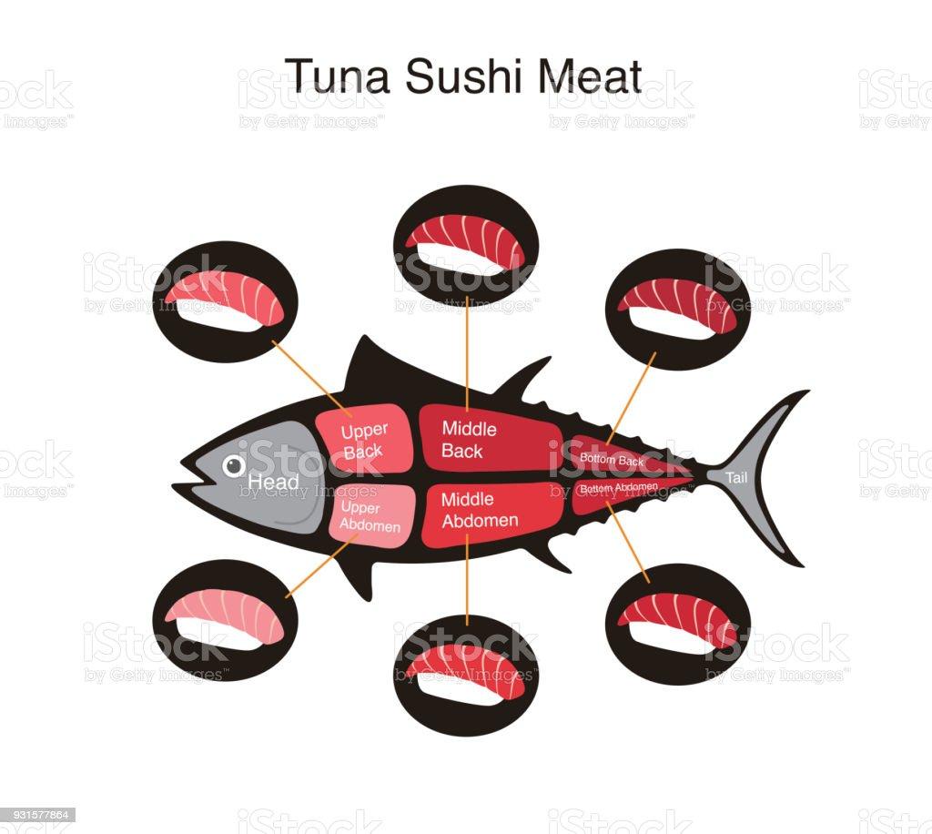 Tuna fish cuts diagram vector illustration stock vector art more tuna fish cuts diagram vector illustration royalty free tuna fish cuts diagram vector illustration nvjuhfo Images