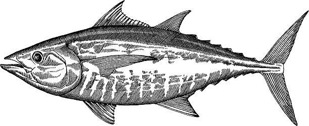 ilustraciones, imágenes clip art, dibujos animados e iconos de stock de atún de peces dibujo - atún pescado