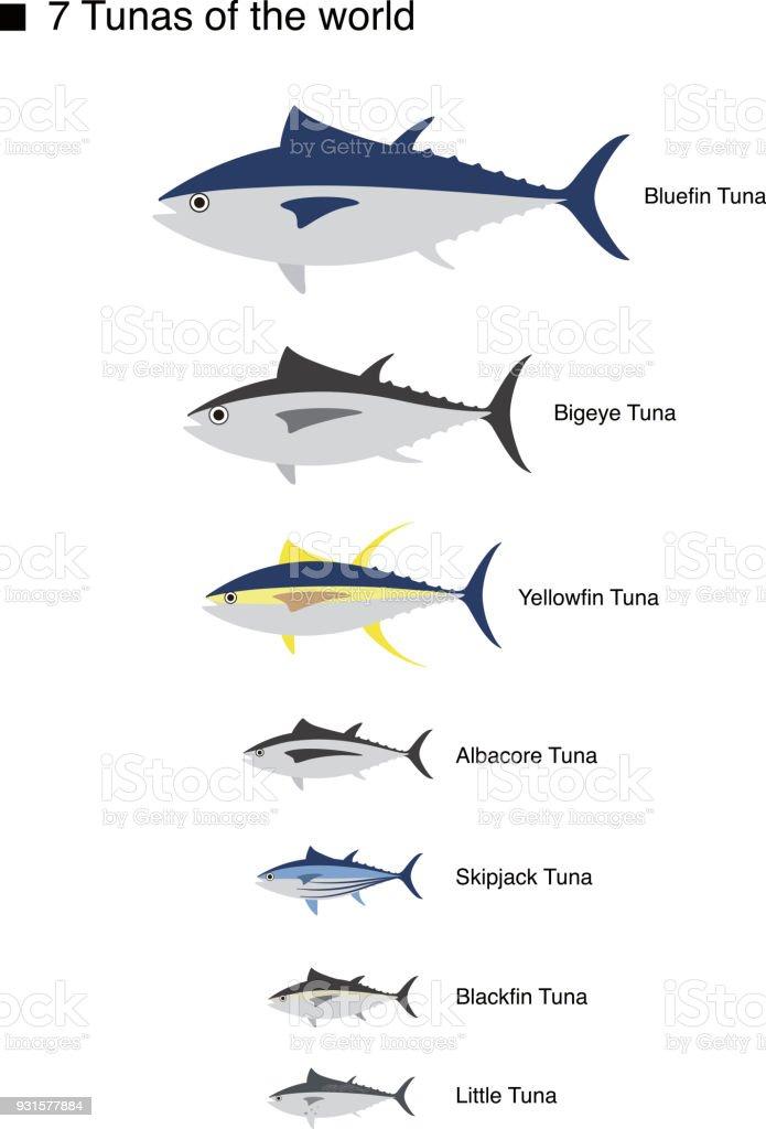 tuna fish family, vector illustration vector art illustration