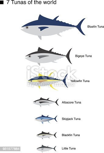 Tuna Fish Family Vector Illustration Stock Vector Art More Images