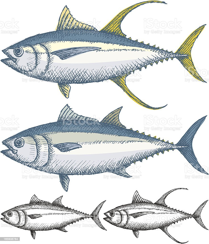 Tuna fish vector art illustration