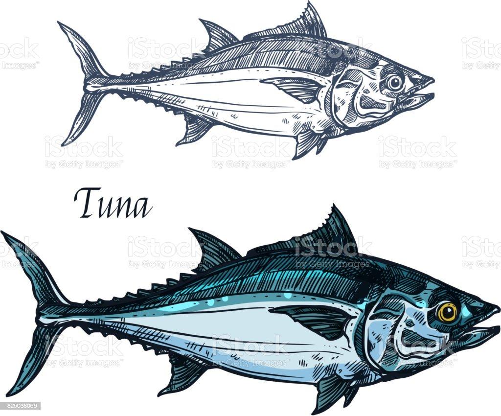 Tuna fish vector isolated sketch icon vector art illustration