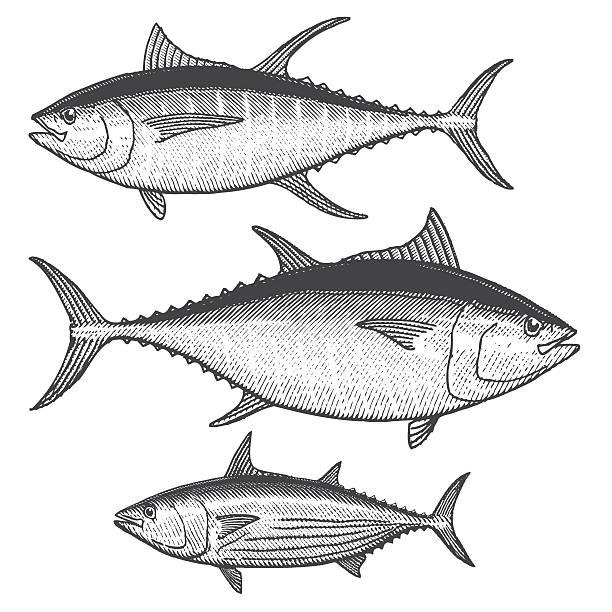 tuna illustrations - граттаж stock illustrations