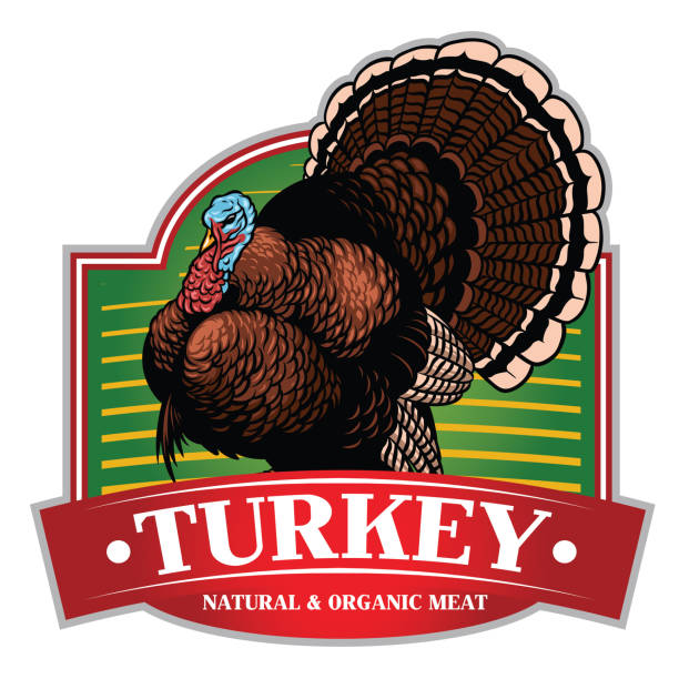 Wild Turkey Illustrations, Royalty-Free Vector Graphics ... (612 x 612 Pixel)