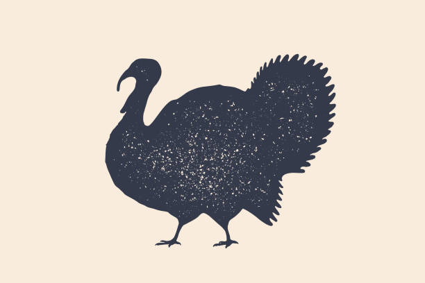 turkey, bird. concept design of farm animals - thanksgiving turkey stock illustrations