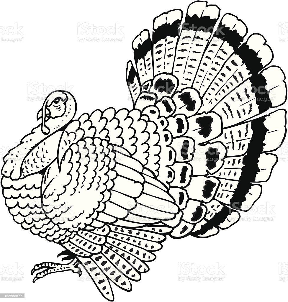 turkey stock vector art 165658677 istock