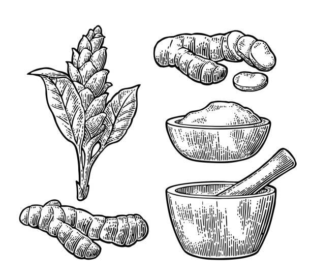 ウコン根、粉末、乳棒と乳鉢と花。 - カレー点のイラスト素材/クリップアート素材/マンガ素材/アイコン素材