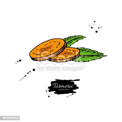 istock Turmeric root sliced pieces. Vector hand drawn illustration. Cur 959509460
