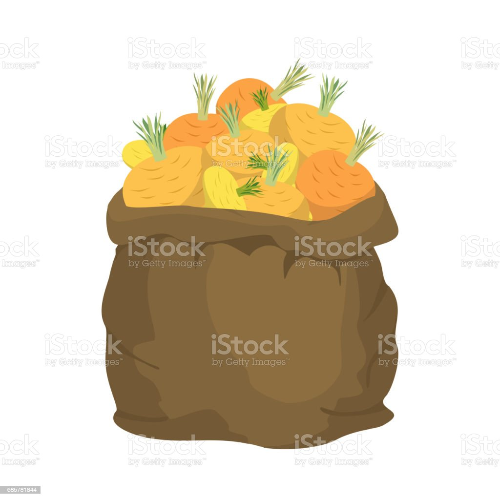 Turnip Burlap bag. sack of vegetables. big crop on farm. sackful Turnips royalty-free turnip burlap bag sack of vegetables big crop on farm sackful turnips stock vector art & more images of agriculture