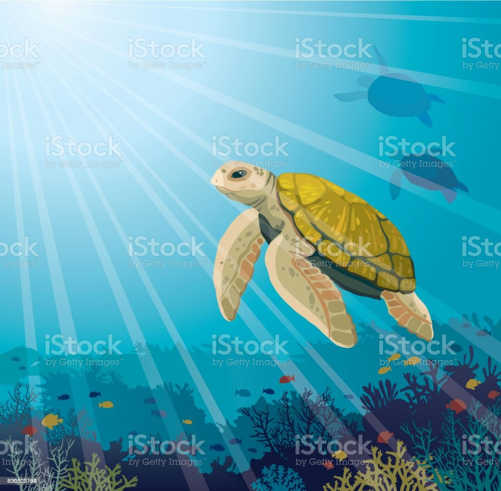 Turtle, coral reef, fishes and underwater sea. - Royalty-free Animal stock vector