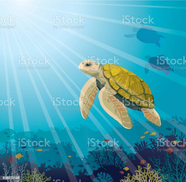 Turtle Coral Reef Fishes And Underwater Sea Stock Illustration - Download Image Now