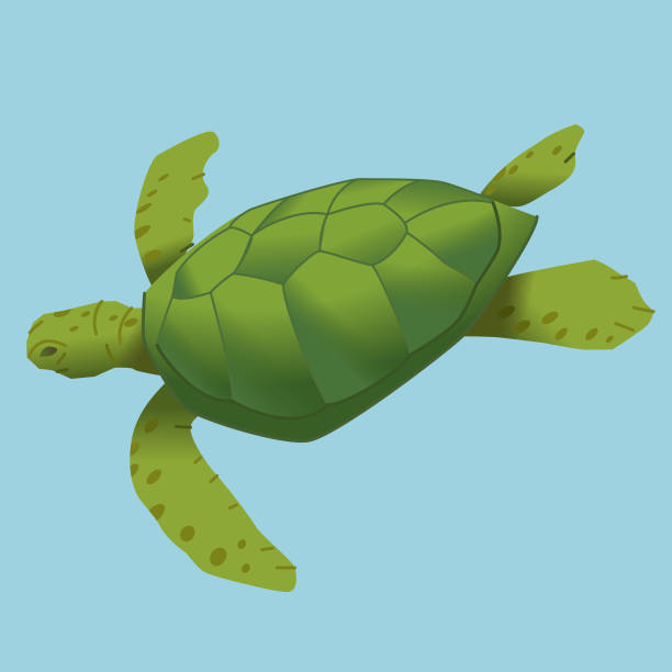 Turtle diving vector art illustration