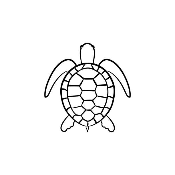 turtle hand drawn sketch icon - turtle stock illustrations