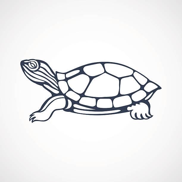 turtle logo vector art illustration