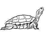Vector Illustration Turtle Gradient Colorful Style.