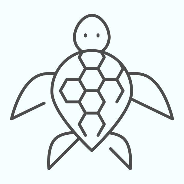 Turtle thin line icon. Ocean or sea kareta tortoise illustration isolated on white. Marine turtle-shell animal outline style design, designed for web and app. Eps 10. Turtle thin line icon. Ocean or sea kareta tortoise illustration isolated on white. Marine turtle-shell animal outline style design, designed for web and app. Eps 10 amphibians stock illustrations