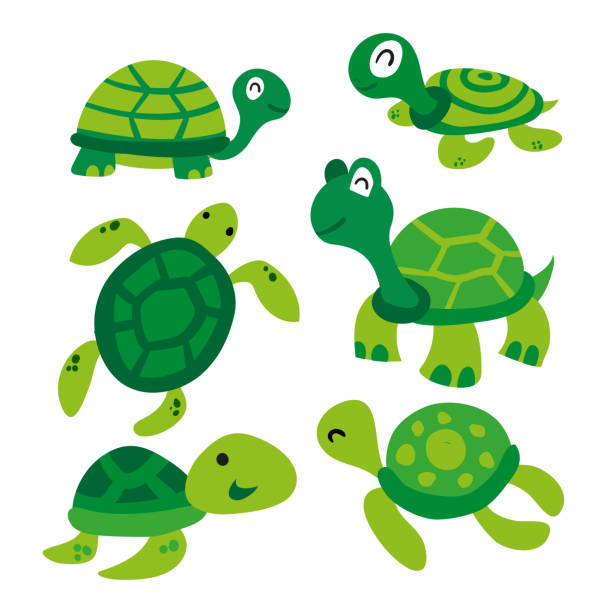 turtle vector collection design turtle vector collection design turtle stock illustrations