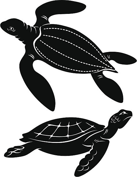 stockillustraties, clipart, cartoons en iconen met turtle - leatherback