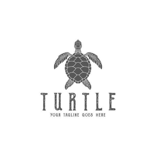 Best Sea Turtle Illustrations, Royalty-Free Vector