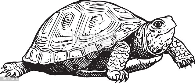 An a vector illustration of turtle.