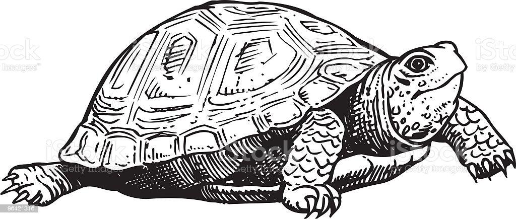Royalty Free Tortoise ...