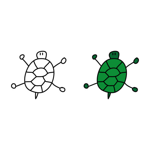 14 Turtle Shell Top View Illustrations Illustrations Royalty Free