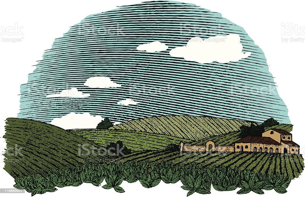 Tuscan Landscape Color vector art illustration