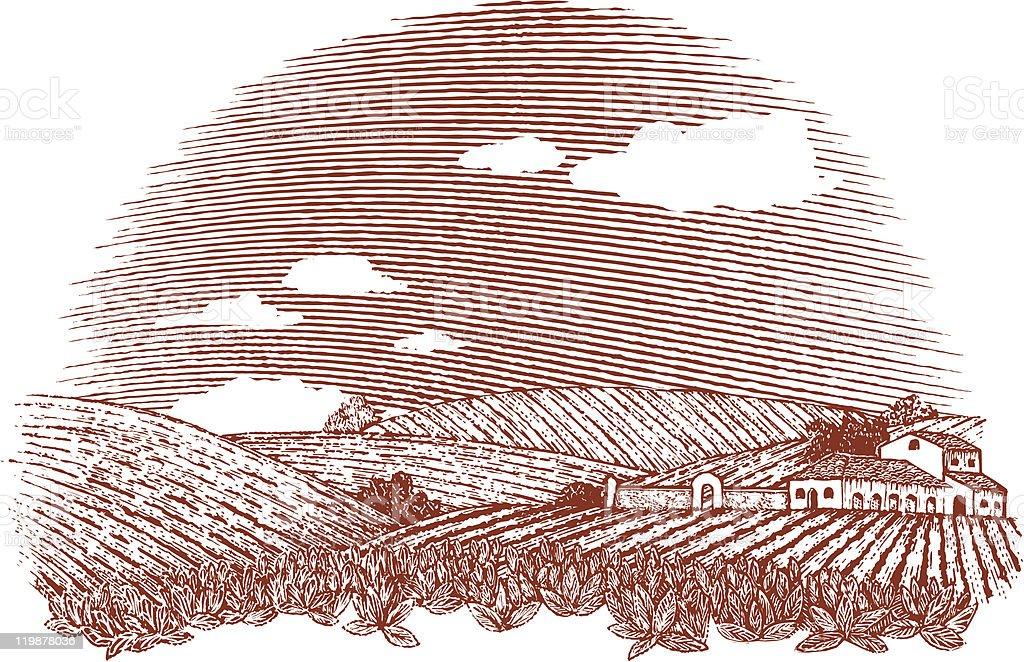 Tuscan Landscape vector art illustration
