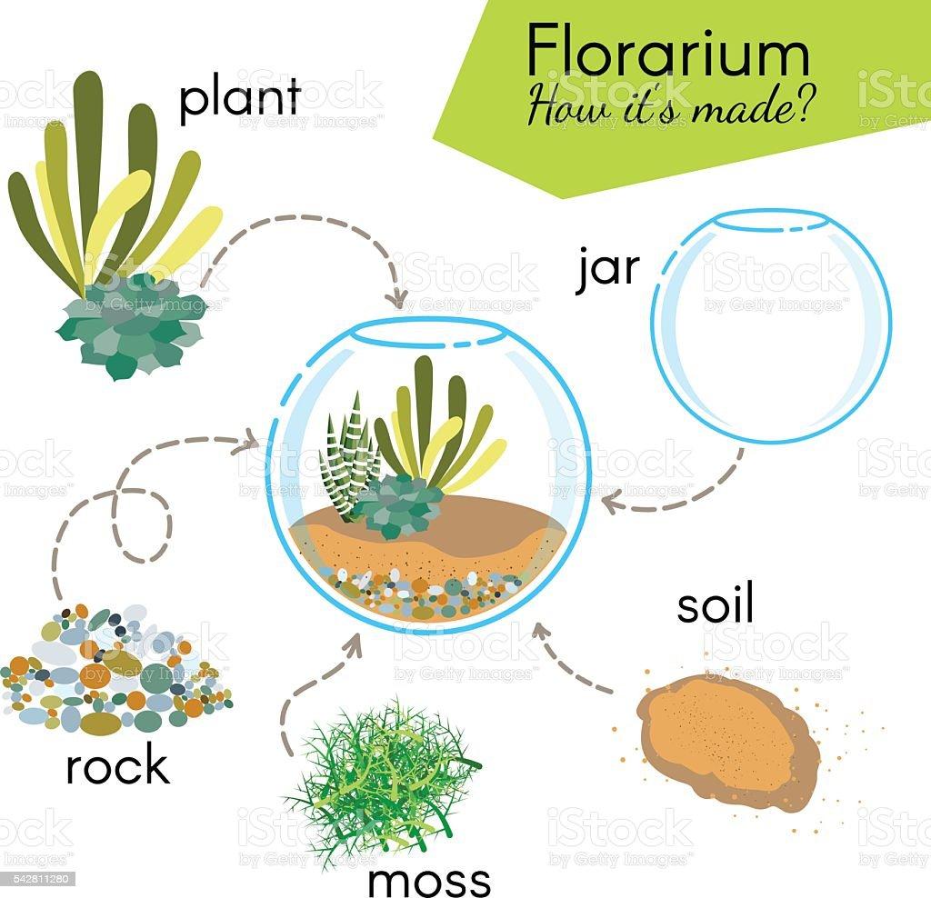 Tutorial how to make florarium. Succulents inside glass terrarium vector art illustration