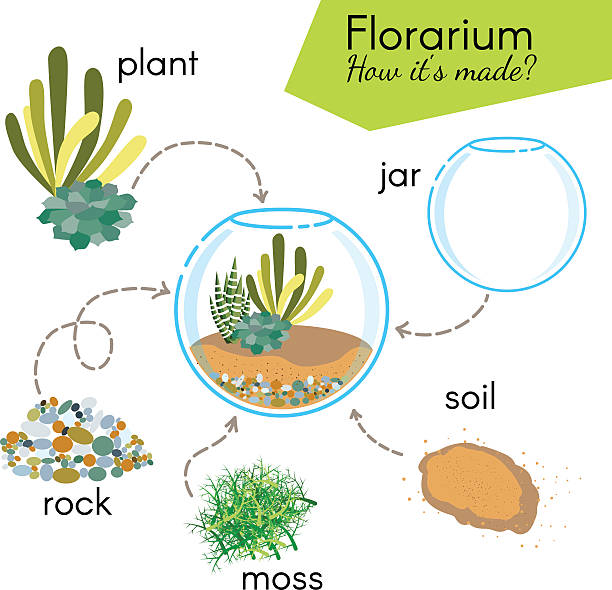 tutorial how to make florarium. succulents inside glass terrarium - moss stock illustrations