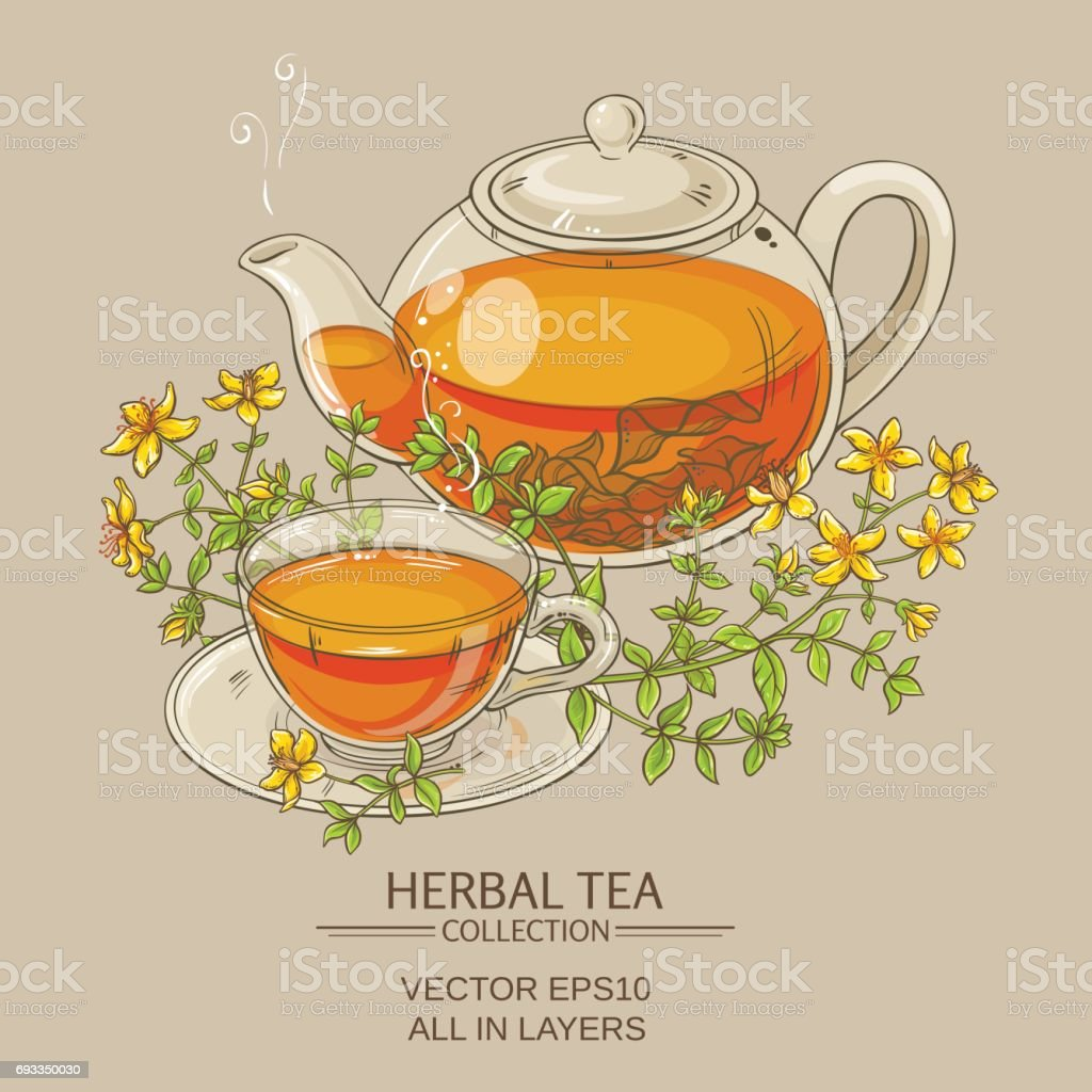 tutsan tea vector illustration