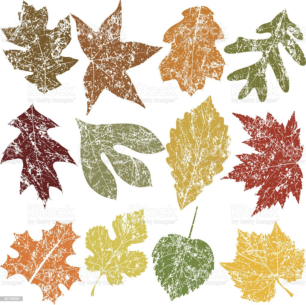 Twelve Grunge Leaves royalty-free stock vector art