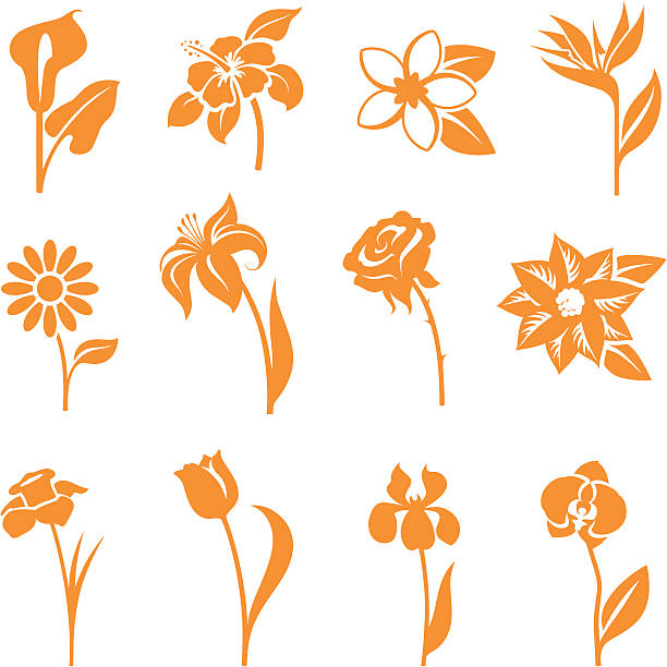 Twelve orange flower icons isolated on white background Flower icons - gradient free and easy to change colour. bird of paradise plant stock illustrations