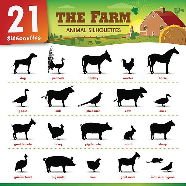 illustrations, cliparts, dessins animés et icônes de une des silhouettes d'animaux de la ferme - animaux de la ferme