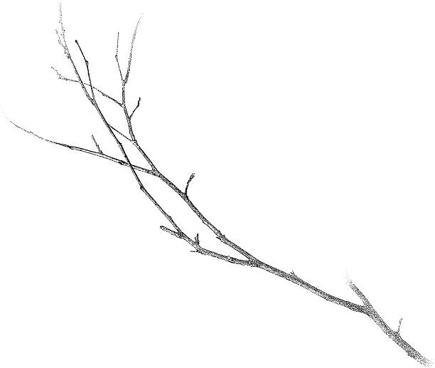 twig isolated on white - twig stock illustrations, clip art, cartoons, & icons