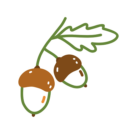 Twig with acorns and leaves in doodle style