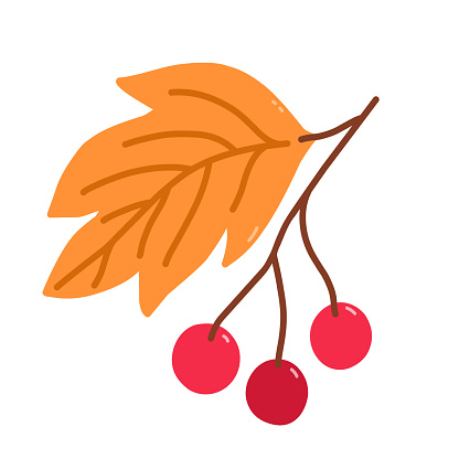 Twig with cranberries and golden leaves