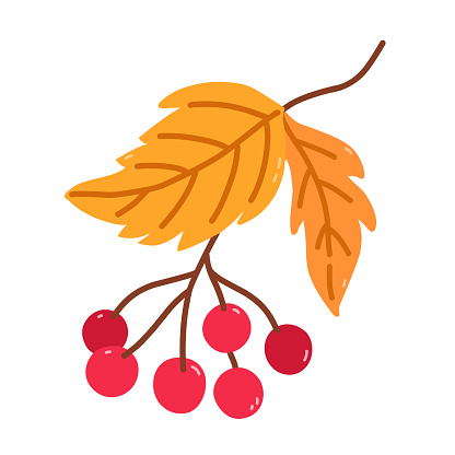 Twig with viburnum and golden leaves isolated on white background. Vector hand-drawn illustration in cartoon flat style. Perfect for your project, cards, logo, decorations.