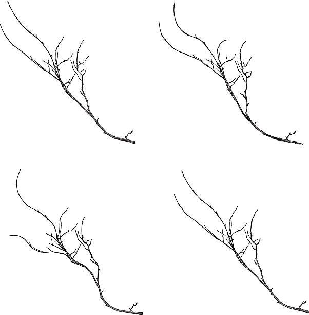 gałęzi na białym tle - gałązka stock illustrations