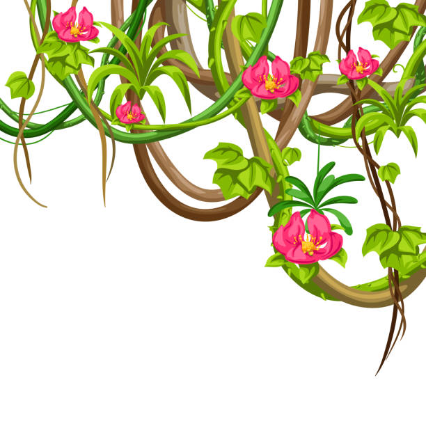 Twisted wild lianas branches background. Jungle vines plants. Twisted wild lianas branches background. Jungle vines plants. Woody natural tropical rainforest. amazon stock illustrations