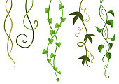 Twisted wild lianas branches set. Jungle vines plants. Woody natural tropical rainforest.