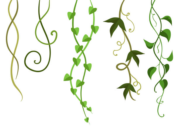 twisted wild lianas branches set. - vine stock illustrations, clip art, cartoons, & icons